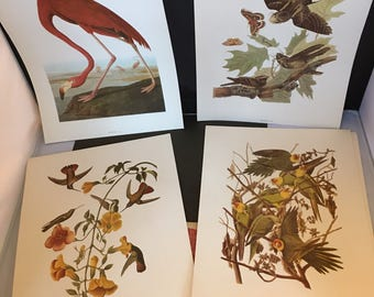 Audubon birds of America portfolio . 16 Beautiful bird prints. National Audubon society 1953.