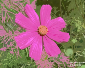 """Signed Original Photograph """"PINK POSY"""" ∎ Print With Mat ∎ Or Print Only"""