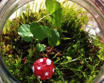 Small Living Ecyosystem Moss Terrarium with Mushroom and Plant