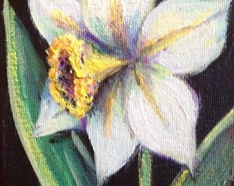 "Daffodil flower still life original floral painting 6 x 4"""