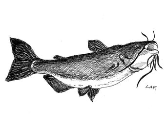 Catfish Print- limited edition prints,prints of fish, fish prints, tropical fish art, black and white art, pen and ink drawing.