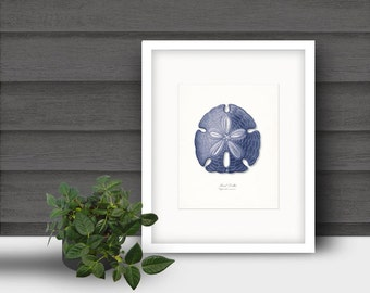 Coastal Decor Indigo Blue Sand Dollar Giclee Art Print