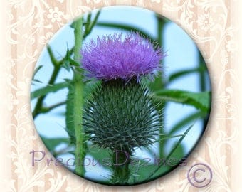"Scottish Thistle button. 2.25"" round pin back button, magnet, pocket mirror, keyring/bottle opener"