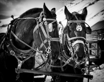 Draft Horse Photograph, Black And White Print, Animal Photography, Team Of Horses, Winter Horse Photo, Western Art, Black Horse Photograph