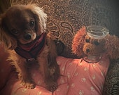 Dog Treat Jar ~ Cavalier King Charles Treat Jar ~ Cavalier King Charles Spaniel ~ Black & Tan Ruby Blenheim Tri-Color Cavalier Treat Jar