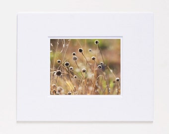 Ranch Grass Fine Art Photography Print SALE