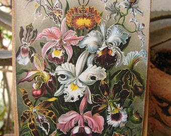 Victorian style,floral image,applied & sealed to wooden tag, dresser, door hanger, small gift