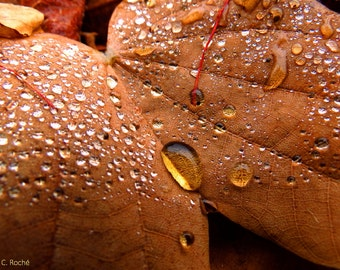 October Raindrops by Catherine Roché, Autumn Nature Photography, Autumn Leaf Photography, Raindrops Photography, Rain Photography, Fine Art
