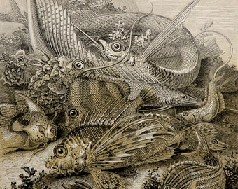 1860 Antique print of OCEAN FISHES. Sea Life. Fishing. Natural History. 157 years old gorgeous lithograph.