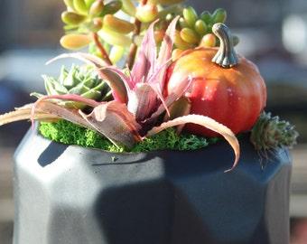 Othello - Graceful Collection of Sempervivum, Sedum, Pink Star Plants in Geometric Shaped Planter