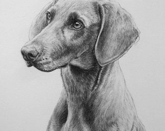 Weimaraner gun dog dog art dog gift dog print fine art Limited Edition print from an original charcoal drawing by H Irvine