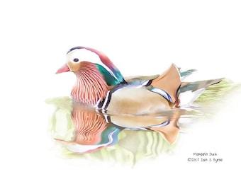 bird print, mandarin duck print, wildlife print, Iain S Byrne, wildlife photography, bird photography, home décor, bird wall art
