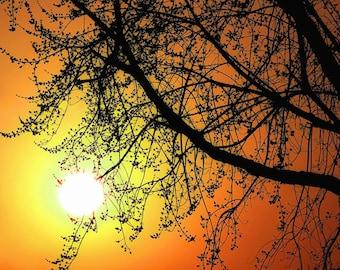 Sun Print, Tree Print, Sunshine Print, Tree Photo, Nature Photography, Tree Art, Sun Picture, Nature Print, Tree Picture, Sunshine Photo