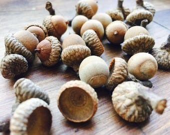 Real Acorns Mix 20+, Natural acorn caps, Acorn tops, Rustic Wedding, Fall DIY Acorns, Natural Acorns fall decorating, Dried Acorns Crafts