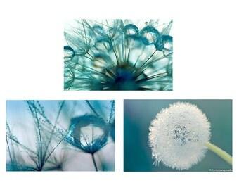 Dandelion Bathroom Print Set - Set of 3 dandelion prints 8x10 teal winter photography rain 11x14 blue dandelion photography 16x20 wall art