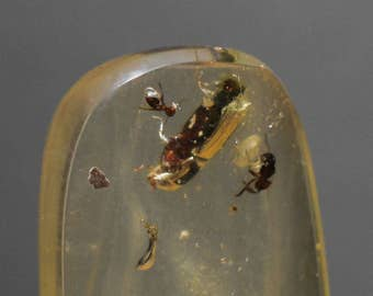 Amber Copal Columbian with insect inclusions hand polished natural stone