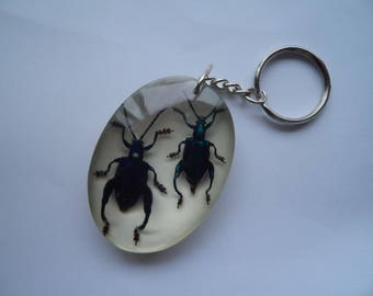 Taxidermy Real Inects Sagra Femorata Beetles Key Ring Insect Entomology Collectables Key Chain