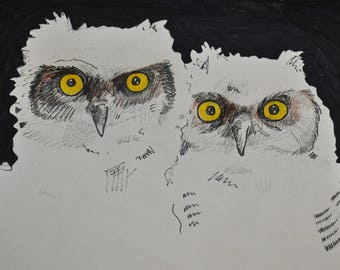 Eberwhite Owlets 2017