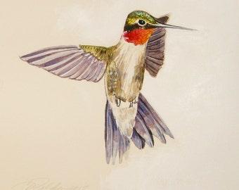 Ruby Throated Hummingbird bird paintings hummingbird original paintings watercolor hummingbird