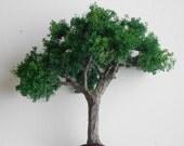 """SALE:  10"""" Mahogany Shade Tree"""