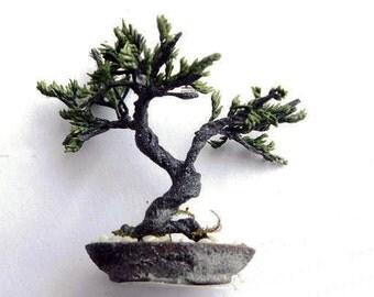 5 styles Juniper Bonsai