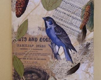 Bluebird Collage