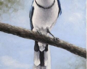 Magpie Jay print