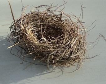 Authentic Empty Bird's Nest