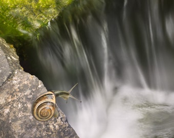 """Snail and waterfall all occasion card - 5x7"""" frameable"""