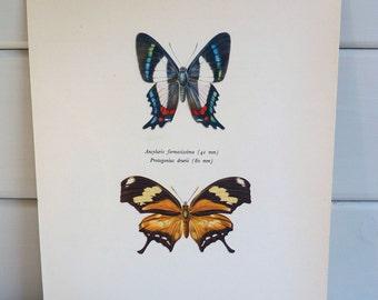 Vintage Butterfly Print circa 1965 by Prochazka, wall decor Book Plate
