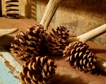 "DIY 50 Ponderosa Pine Cones (or 5-500), Pinecones, Craft Supplies, Fall Decor, (2""-5"" Tall) Wedding Decor, 100% Organic, Pine Cone Crafts"