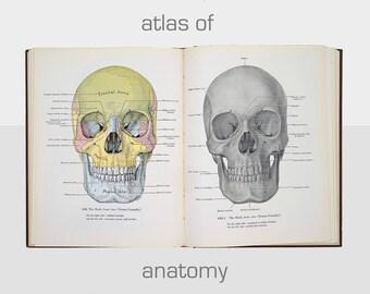 an atlas of anatomy book, vintage anatomy book, an atlas of anatomy by j.c. boileau grant, vintage science book, vintage anatomy textbook