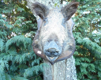 Vintage French Mounted Boars Head *B11