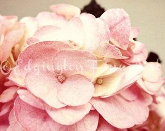 Pink Hydrangea, Hydrangea photography, flower photography, pink flowers, flower photo, botanical art, nature photo, shabby chic decor, pink