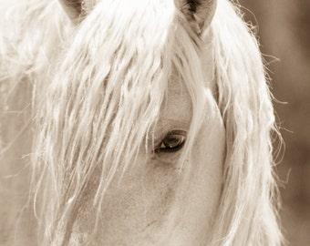 "Wild Horses,Horse photos, Horse Print.  ""Glimmer"""