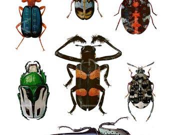 Antique Colorful Beetles Illustration. Vintage Beetles Coleoptera Print. Insects Collage Sheet. Beetles Digital Download.
