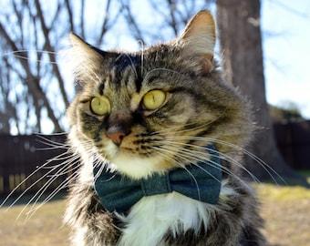 blue jean cat collar, blue jean bow tie for cat, blue cat collar, blue cat bow tie,  collar for boy cat, kitten bow tie, kitten collar