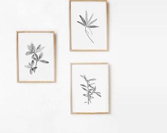 Botanical Print Set, Minimalist Nature Print Art, Printable Art Print Set 8x10 Minimalist Art, Black And White Photography DIGITAL DOWNLOAD