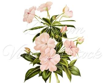 Floral Wall Art Print, Botanical Print, Botanical White Flowers Digital Image, Vintage Illustration for Print, Artwork INSTANT DOWNLOAD 2548