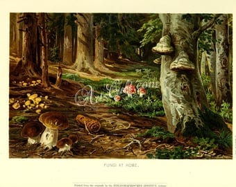 mushrooms-04947 - Fungi at home, Mushrooms in forest wood, landscape painting still life illustration printable picture image book page jpg