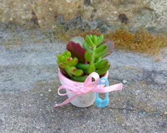 "80 Baby Shower Succulent Favors 1 3/4"" x 1 3/4"" Mini Terra Cotta Pots"