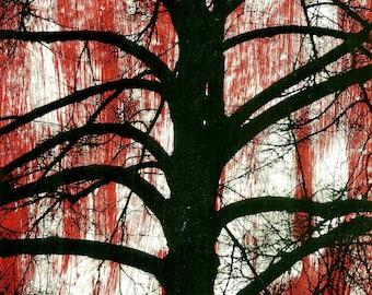 Tree, red, Photo, Collage, Art, original