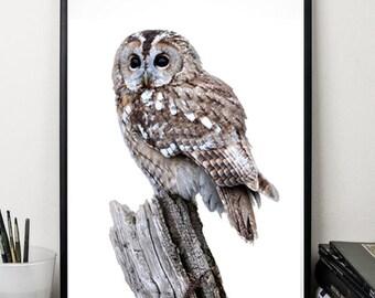 Owl print nursery printable cute animals print wall art decor digital download poster 5x7 8x10 12x16 grey white minimalist art poster