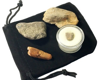 Dinosaur Fossil Gift Pack - Two Dinosaur Teeth and Two Dinosaur Bone Pieces in a Velvet Bag! - Spinosaurus and Edmontosaurus Teeth!