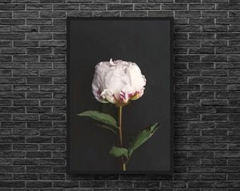 White Peony Print - Peony Photography - White Flower Print - Botanical Photo - Botanical Print - Flower Wall Decor - Peony Photo - Vertical