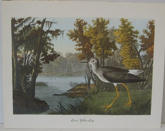 "Lesser Yellow-Legs -Large Audubon Print-Double Elephant Folio- 15"" x 11 1/2"" Beautiful Color Vintage Bird Print"
