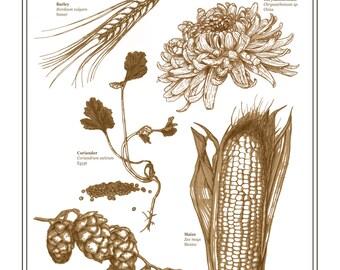 "Botany of Beer 11""x14"" Giclee Print"