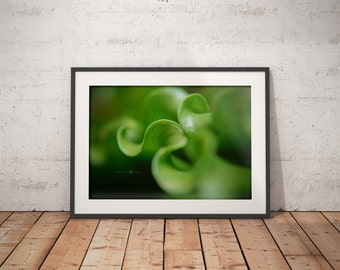 Nature Photography, Art, Unique Photography, Wall Art, Fern