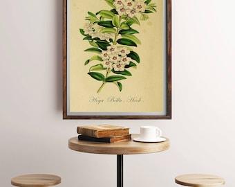 Botanical Art Prints, Victorian Art, Garden Wall Art, Vintage Prints, Antique Prints, Flower Art Print, Botanical Art, Antique Botanical Art