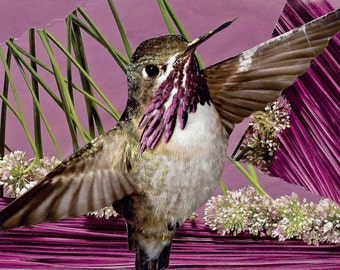 BIRD: Purple Haze